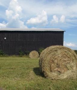 at_barn_bb