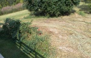 backyard_cut_bb