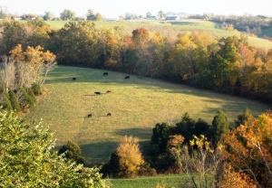 cows_bb