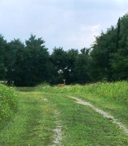 deer_on_driveway_bb