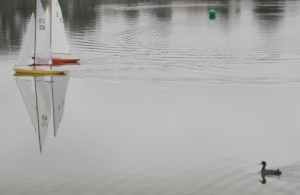 Model sailboats and a Coot