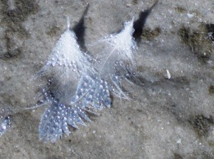 feather jewels on sand