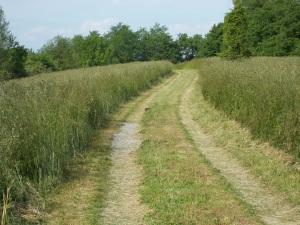 driveway path amid tall grass
