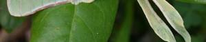 cropped-luna-moth1.jpg