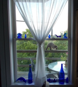 Raccoon (from dining room window)