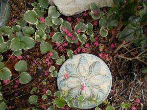 Joan's flower garden