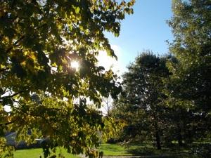 047 arboretum sun peeking thru_b