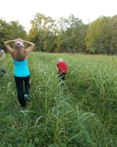 walking in alfalfa