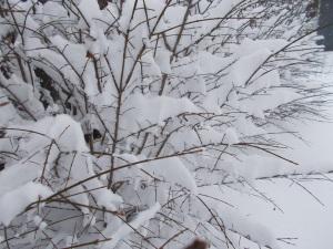 2015-03-05 snow 011_b