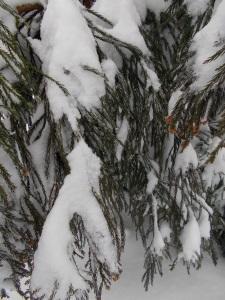 2015-03-05 snow 021_b
