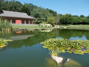 garden pond reflection_b