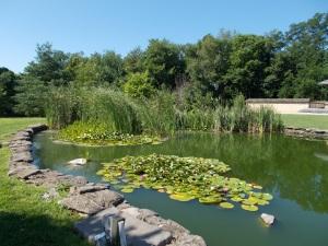 garden pond5_b